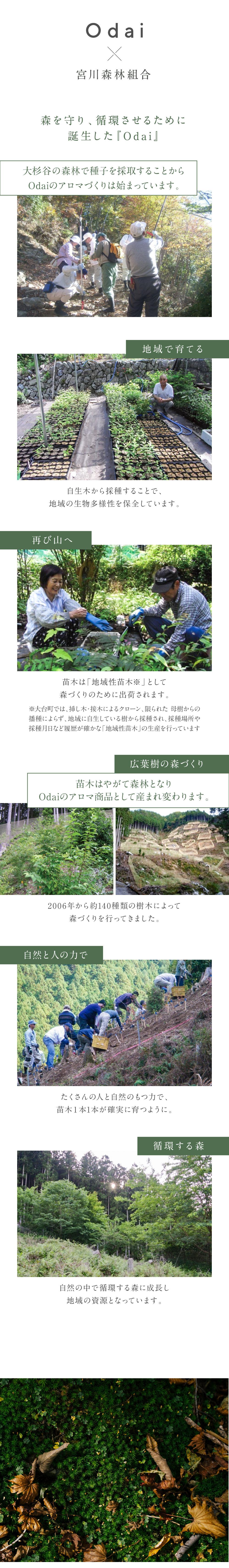 宮川森林組合が中心となり循環する森づくりに取り組んでいます。